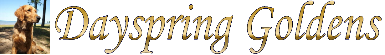 Dayspring Goldens